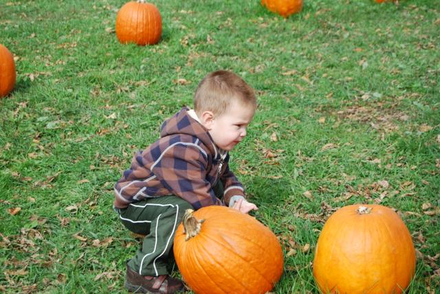 2012-10-14-Pumpkins - 001